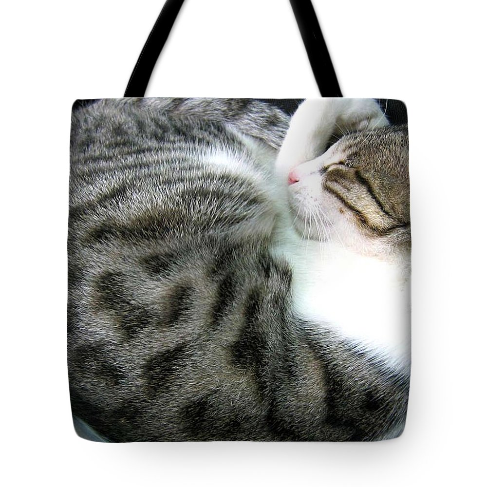 My Pet Cat Gowrie Tote Bag featuring the photograph Gowrie by Asha Sudhaker Shenoy