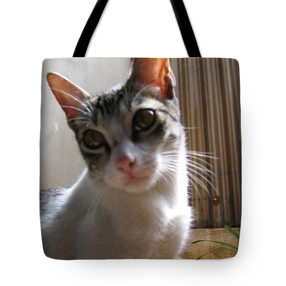 My Pet Cat Gowrie Tote Bag featuring the photograph Gowrie The Cat by Asha Sudhaker Shenoy
