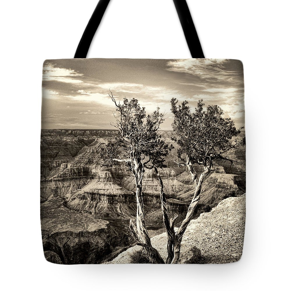 Grand Canyon Tote Bag featuring the photograph Grand Canyon Lone Tree by Sissy Schneiderman