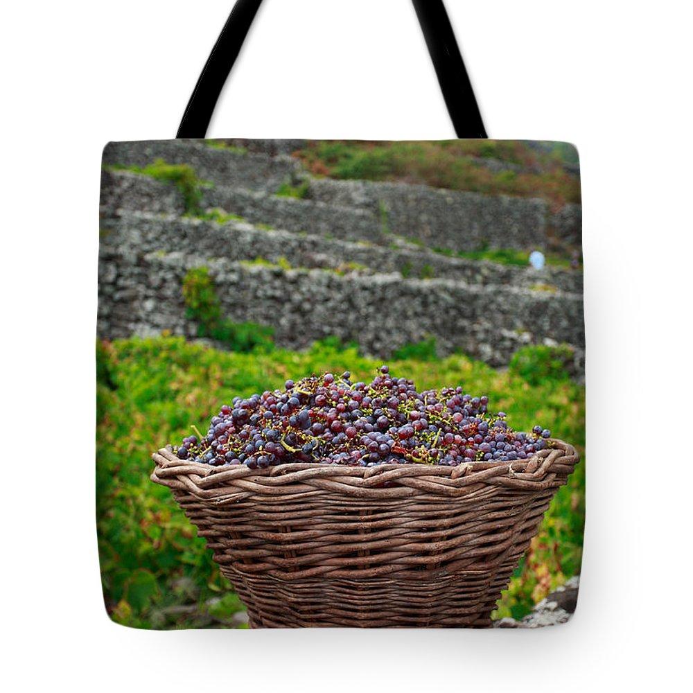 Basket Tote Bag featuring the photograph Grape Harvest by Gaspar Avila