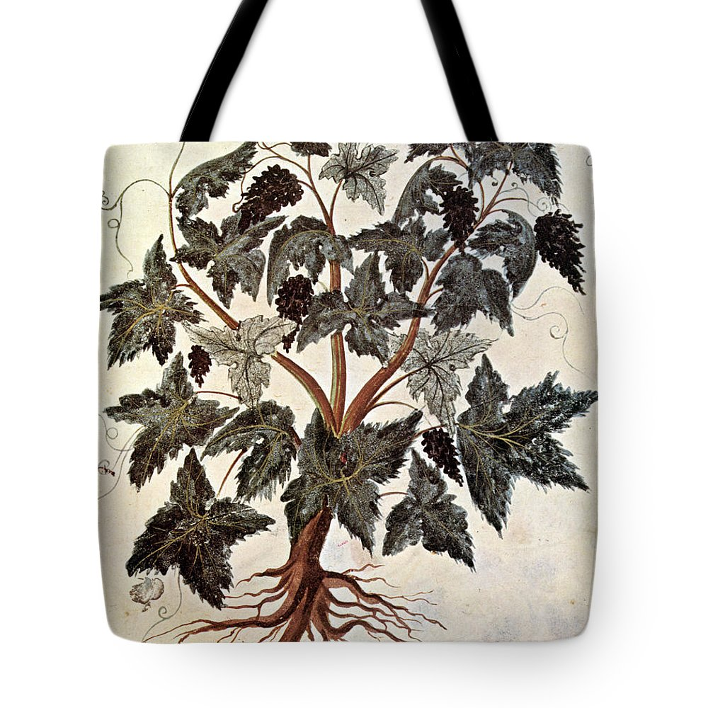 1229 Tote Bag featuring the photograph Grapevine, 1229 by Granger