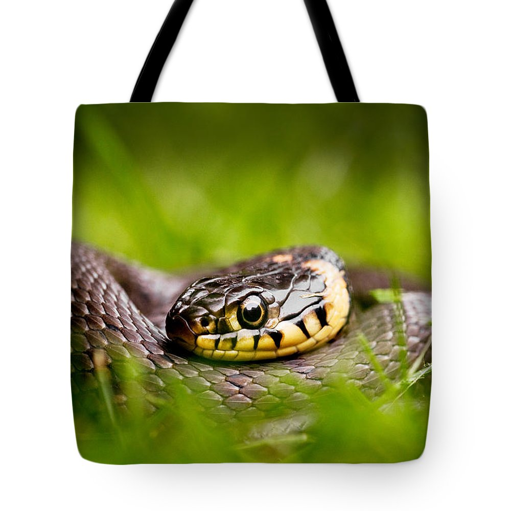 Grass Snake Photographs Tote Bags