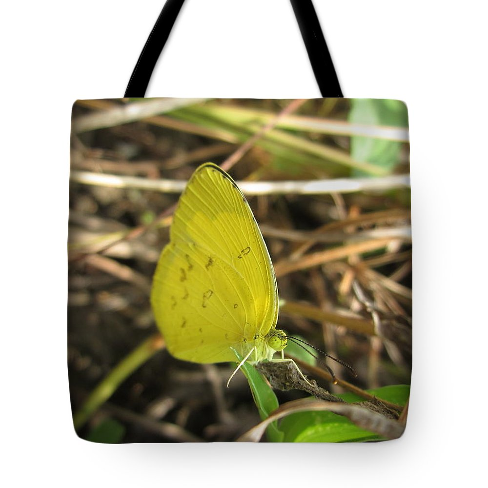 Animals Tote Bag featuring the photograph Grass Yellow 01 by Kalyan Sinha