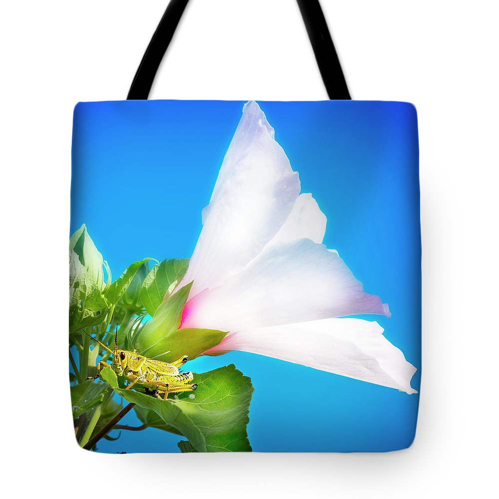 Lubber Grasshopper Tote Bag featuring the photograph Grasshopper And Blue Sky by Mark Andrew Thomas