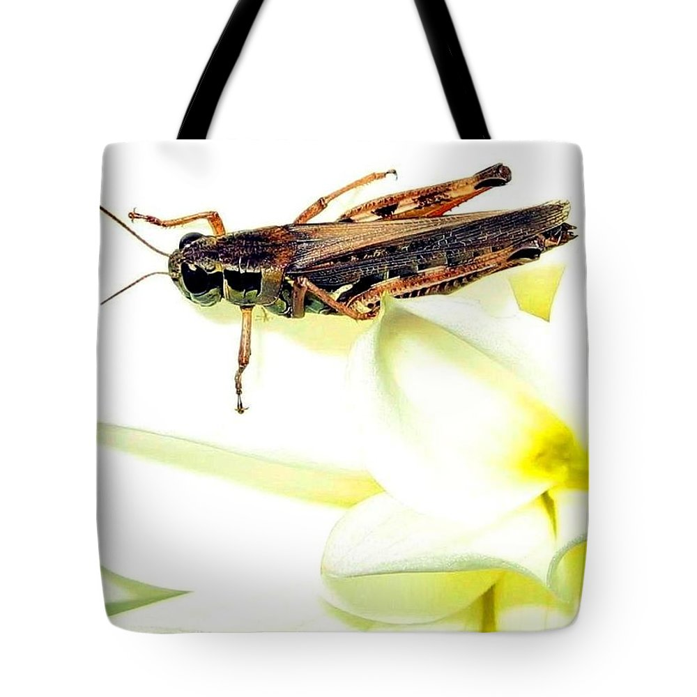 Grasshopper Tote Bag featuring the photograph Grasshopper by Will Borden