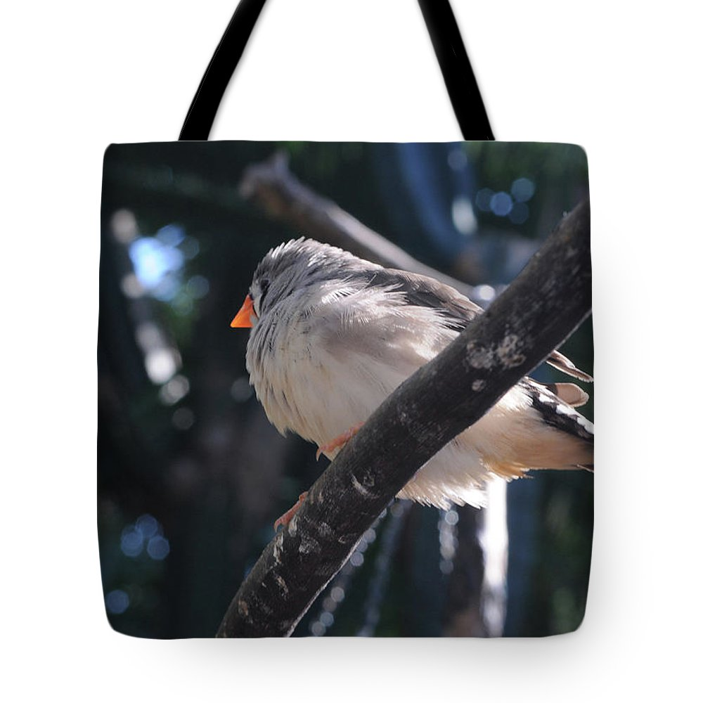 Gray Crowned Rosy Finch Tote Bag featuring the photograph Gray Crowned Rosy Finch  by Haleh Mahbod