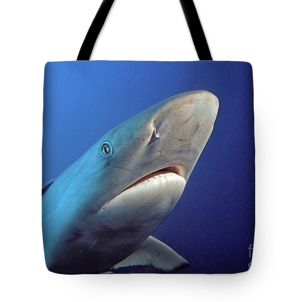 Amblyrhnchos Tote Bag featuring the photograph Gray Reef Shark by Dave Fleetham - Printscapes