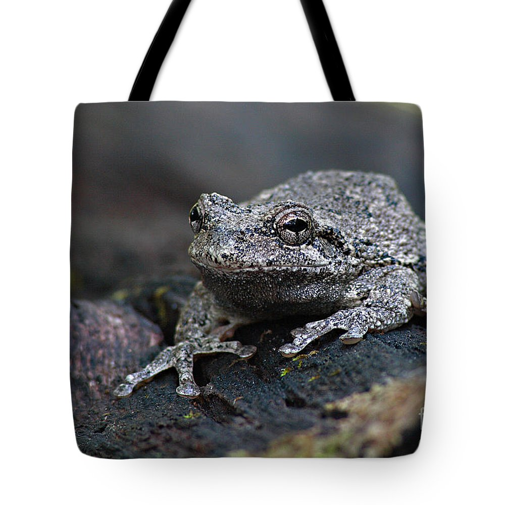 Frog Tote Bag featuring the photograph Gray Treefrog On A Log by Max Allen