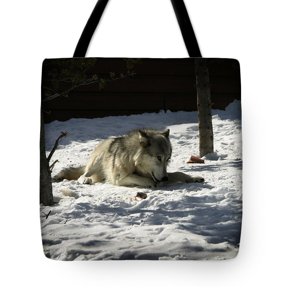Gray Wolf Tote Bag featuring the photograph Gray Wolf 2 by Anthony Jones