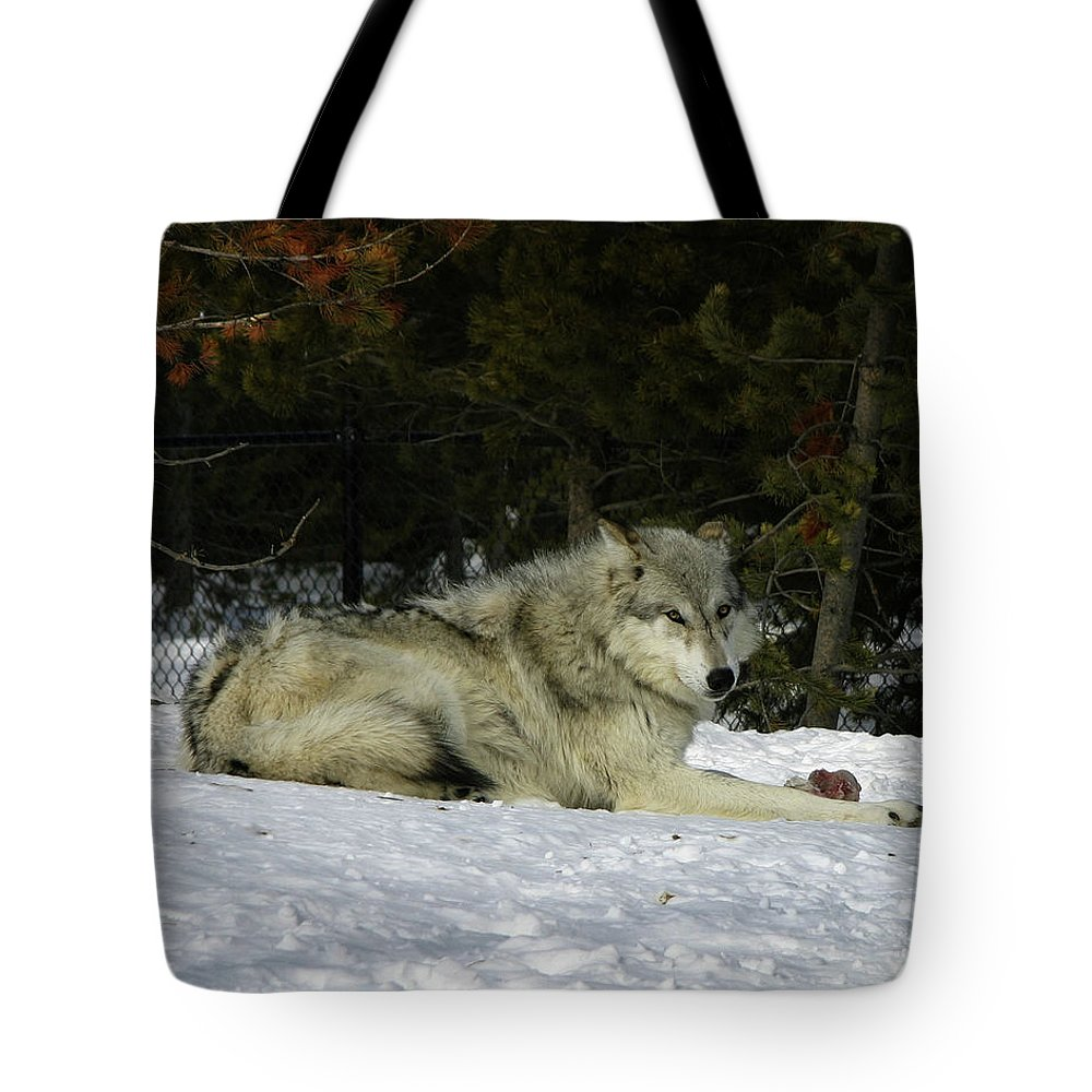 Gray Wolf Tote Bag featuring the photograph Gray Wolf 5 by Anthony Jones