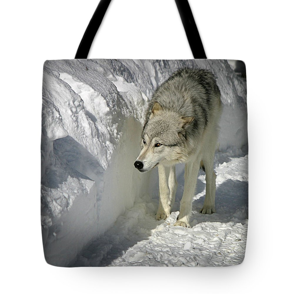 Gray Wolf Tote Bag featuring the photograph Gray Wolf 7 by Anthony Jones