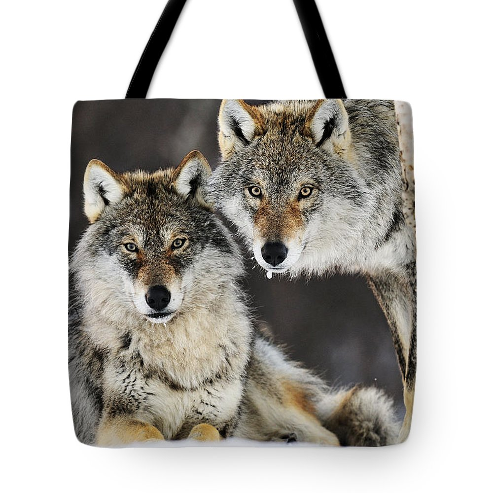 Mp Tote Bag featuring the photograph Gray Wolf Canis Lupus Pair In The Snow by Jasper Doest