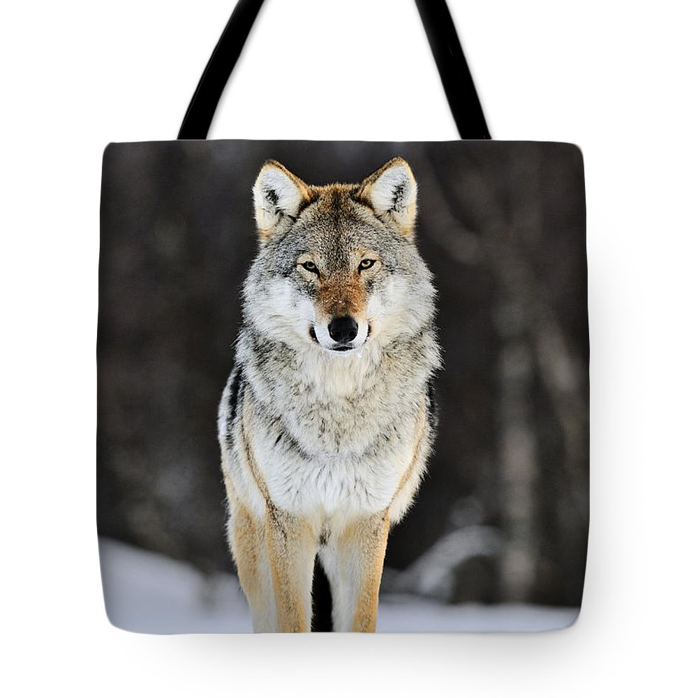 Mp Tote Bag featuring the photograph Gray Wolf In The Snow by Jasper Doest