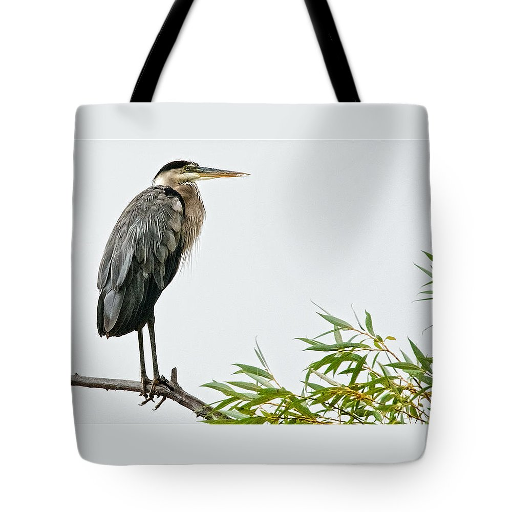 Nature Tote Bag featuring the photograph Great Blue Heron in the Rain by Zayne Diamond Photographic