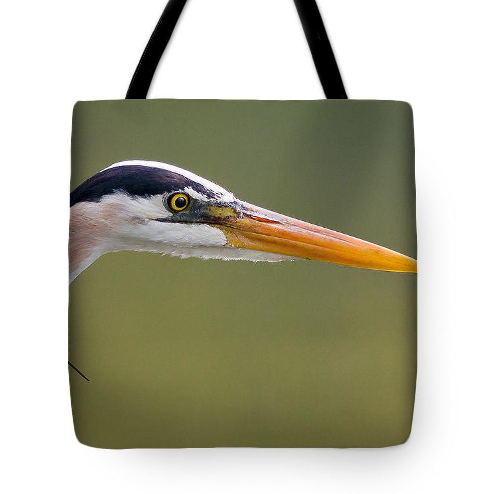 Animals Tote Bag featuring the photograph Great Blue Heron Portrait by Rikk Flohr