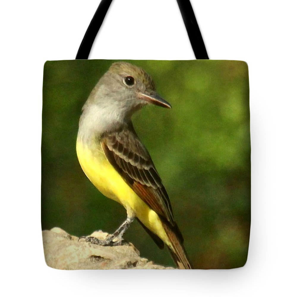 Birds Tote Bag featuring the photograph Great Crested Flycatcher by Myrna Bradshaw