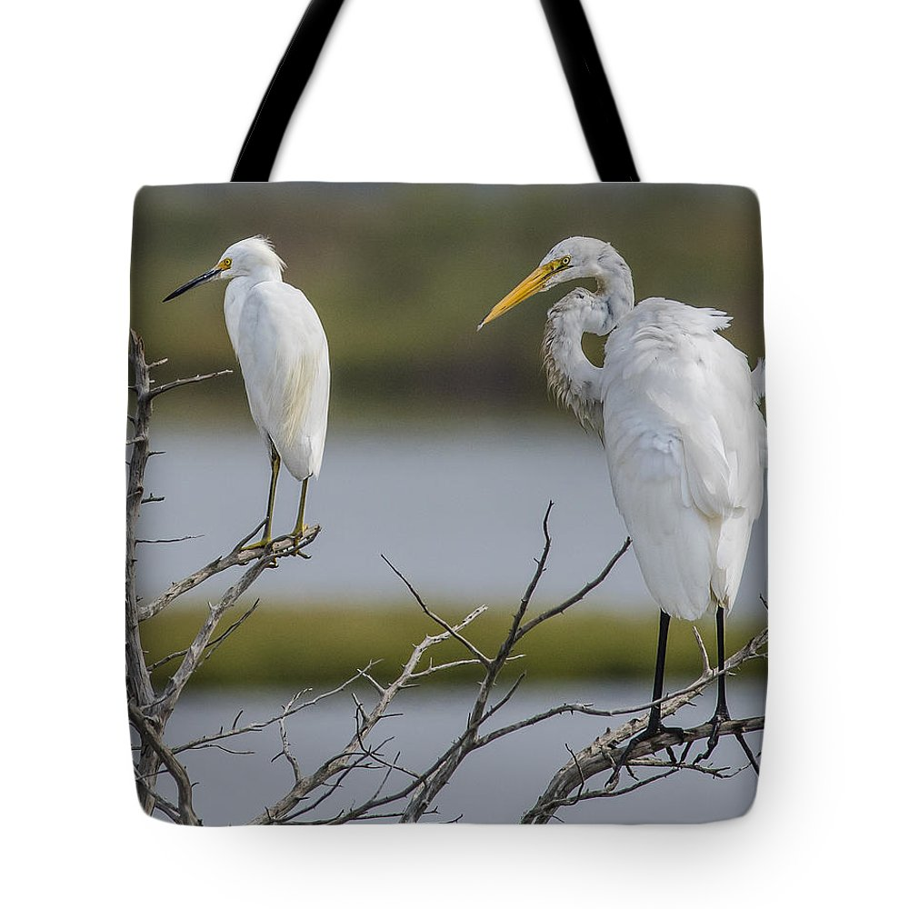 Great Egret And Snowy Egret Perched Tote Bag featuring the photograph Great Egret And Snowy Egret Perched by Morris Finkelstein