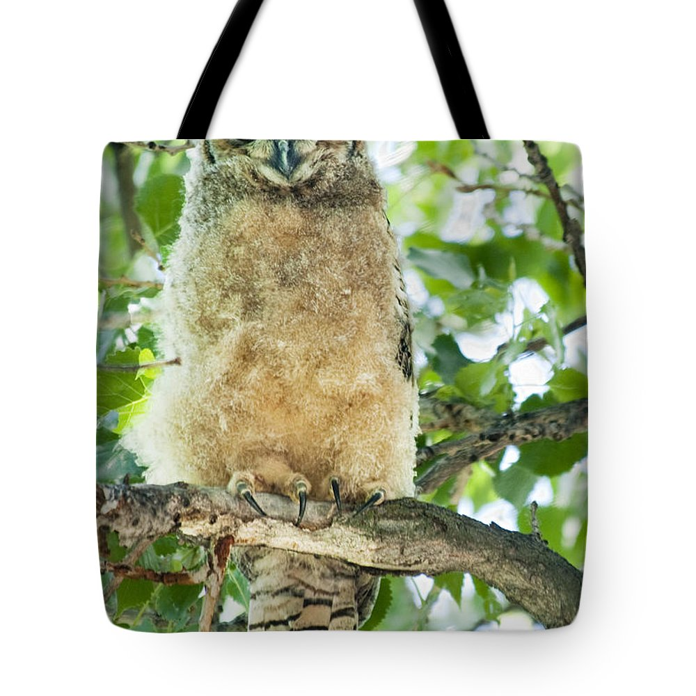 Owl Tote Bag featuring the photograph Great Horned Owl by Gary Beeler