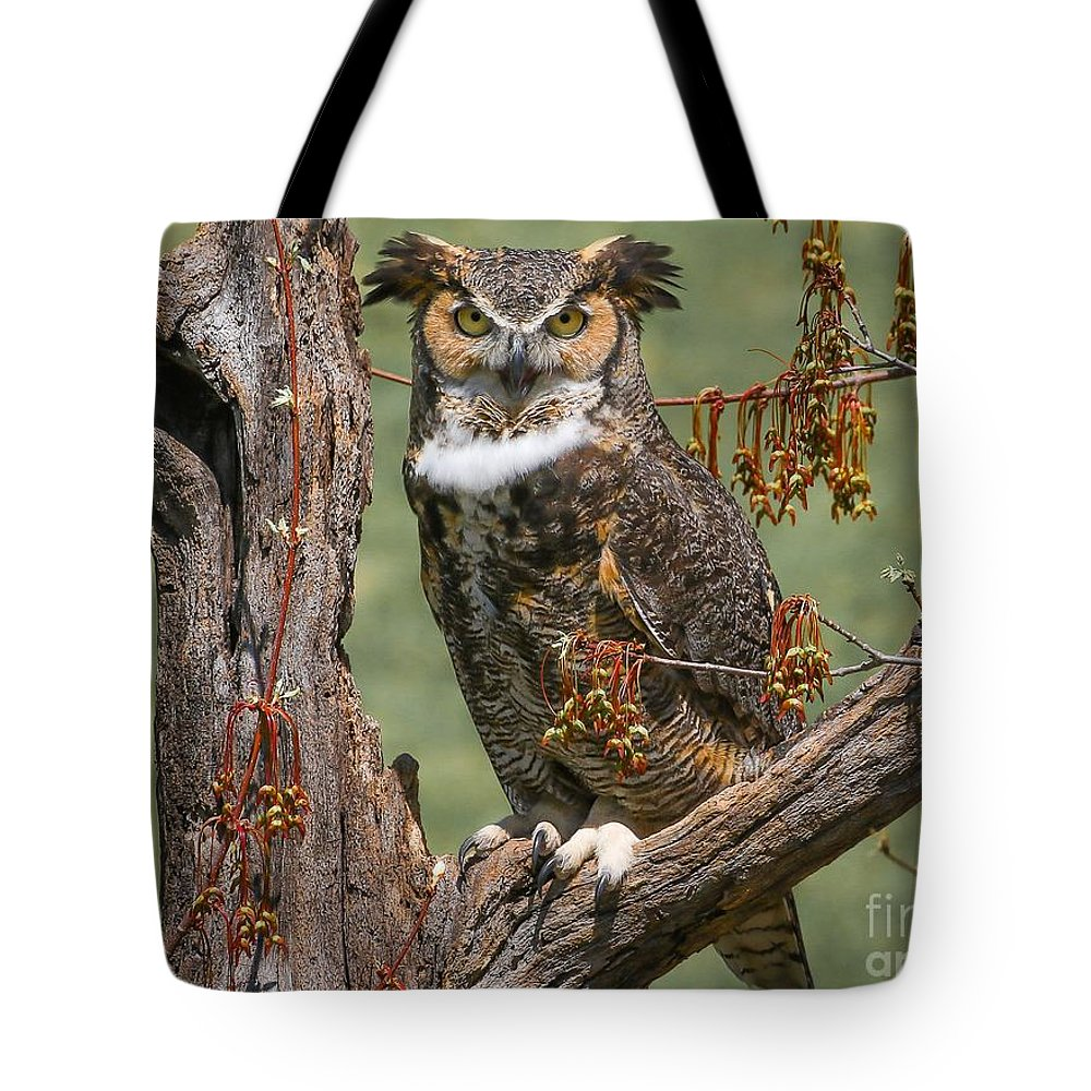 Owl Tote Bag featuring the photograph Great Horned Owl by Susan Grube