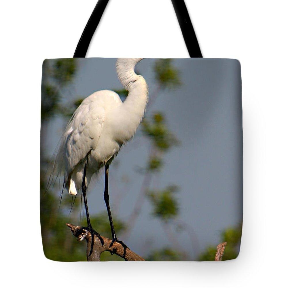 Great White Egret Bird Feathers Flying Florida Sanctuary Wildlife Photograph Photography Tote Bag featuring the photograph Great White Egret Pose by Shari Jardina