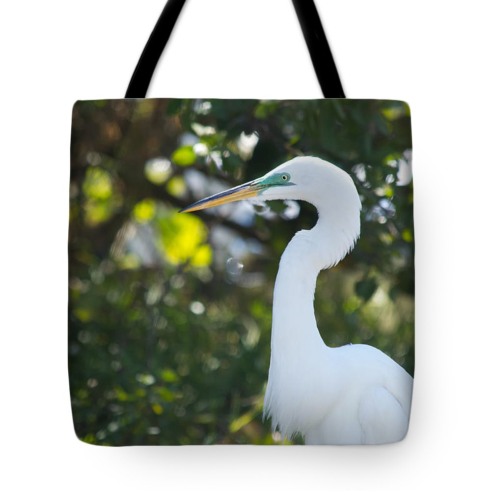 susan Molnar Tote Bag featuring the photograph Great White Portrait by Susan Molnar