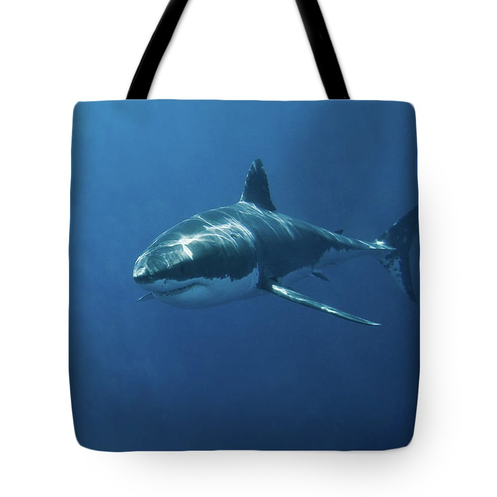 Sharks Tote Bags