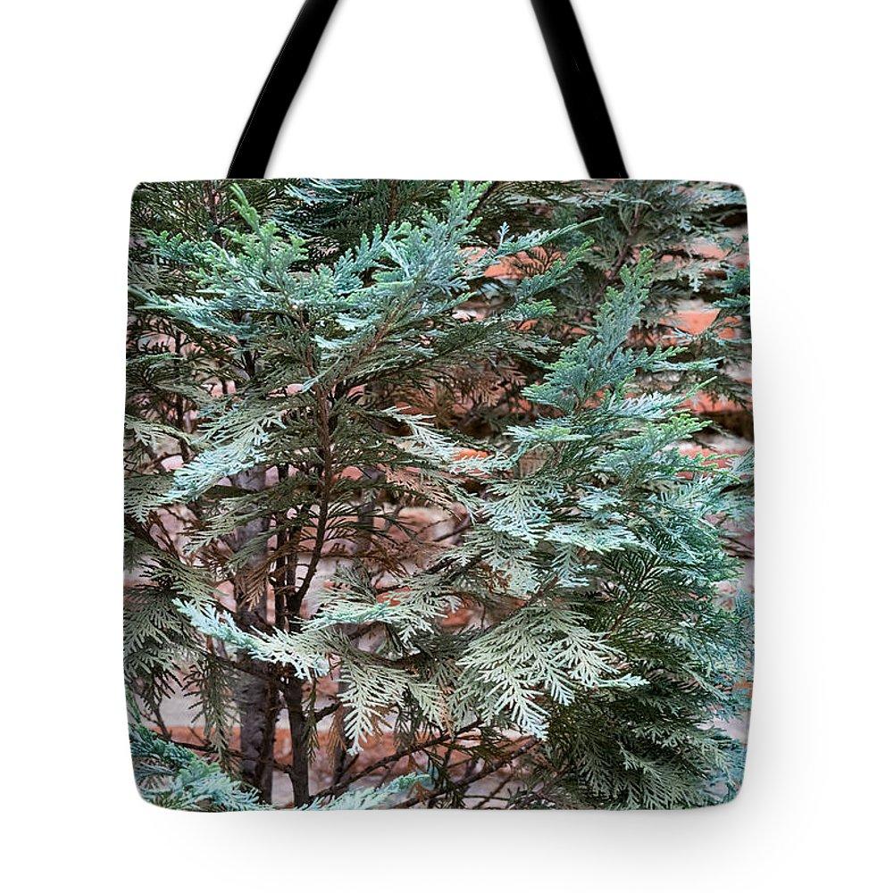 Georgia Mizuleva Tote Bag featuring the photograph Green And Red - Slender Cypress Branches Over Rough Roman Brick Wall by Georgia Mizuleva