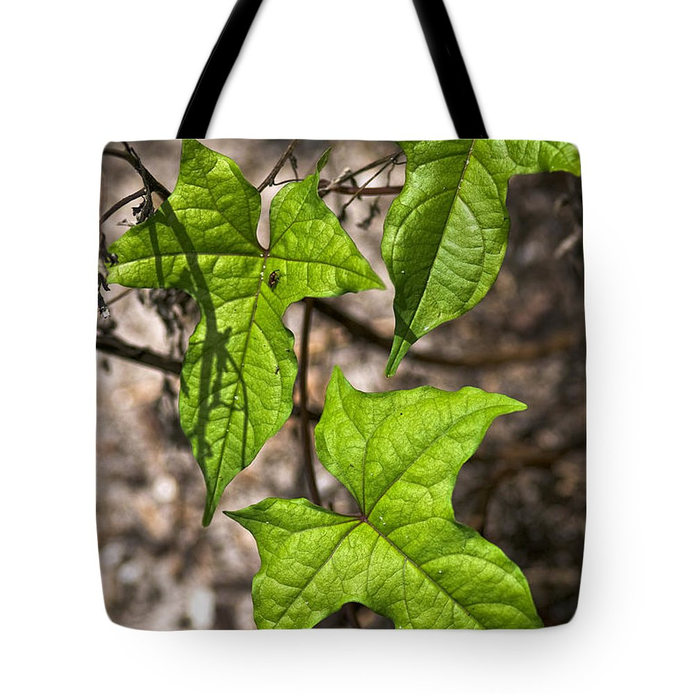 Green Tote Bag featuring the photograph Green Arrowheads by Christopher Holmes