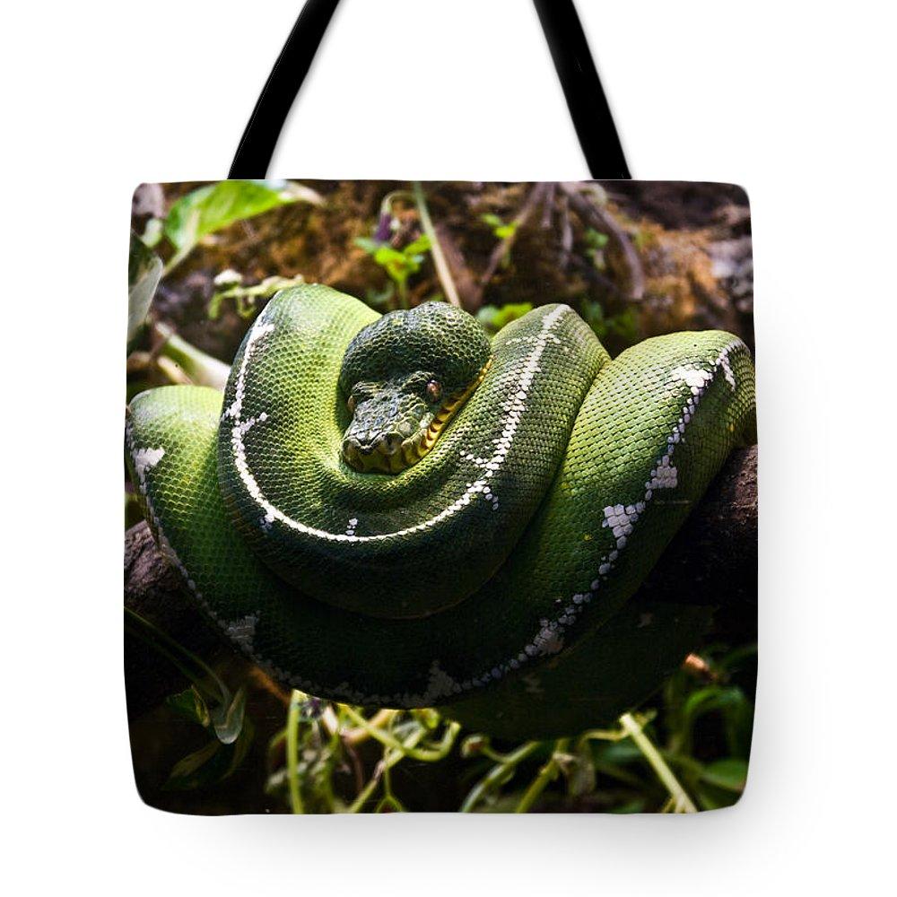 Green Tote Bag featuring the photograph Green Boa by Douglas Barnett