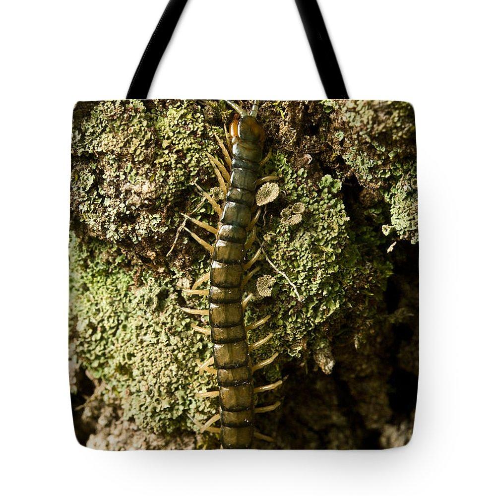Centipede Tote Bag featuring the photograph Green Centipede by Douglas Barnett