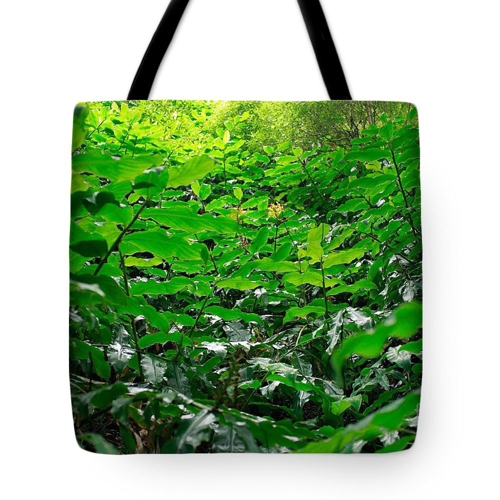 Deep Forest Tote Bag featuring the photograph Green Foliage by Gaspar Avila