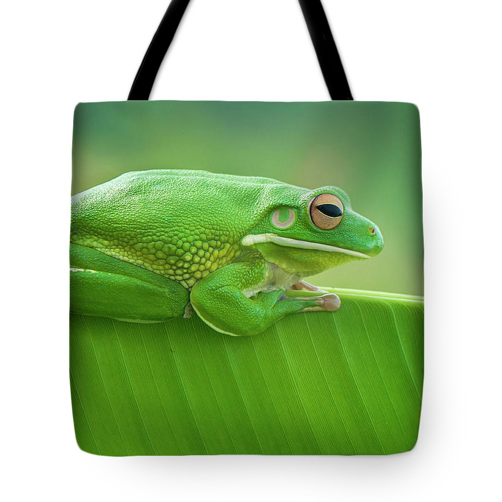 Frog Tote Bag featuring the photograph Green Frog Whitelips by Riza Arif Pratama