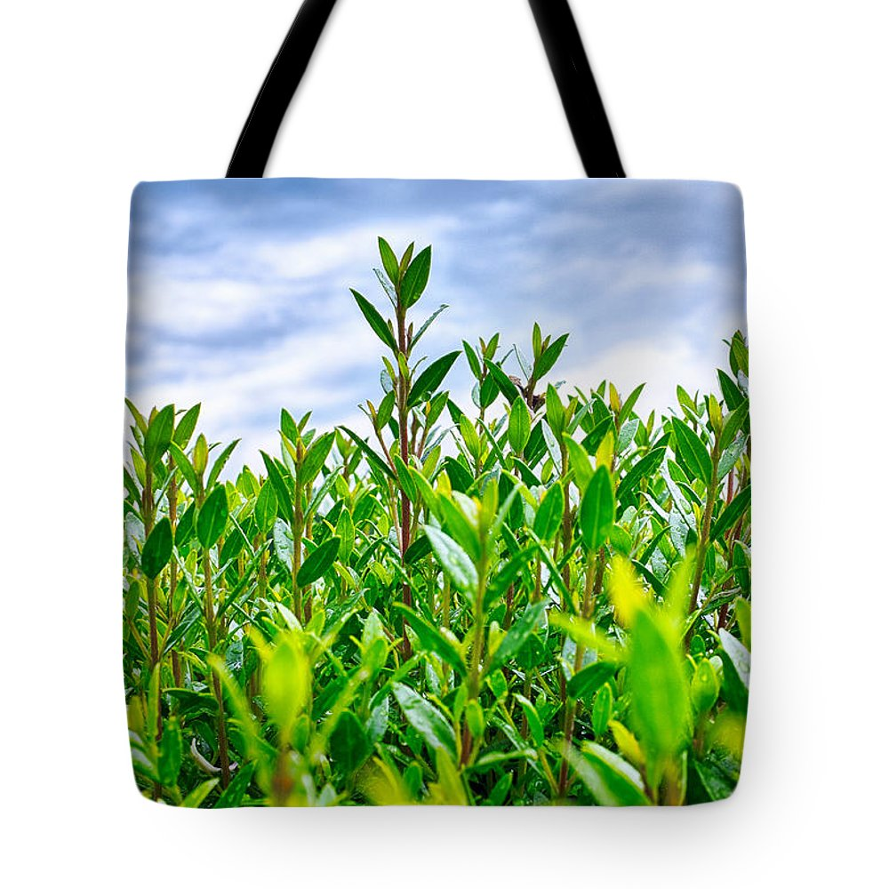 Green Tote Bag featuring the photograph Green Hedge by Fabrizio Troiani