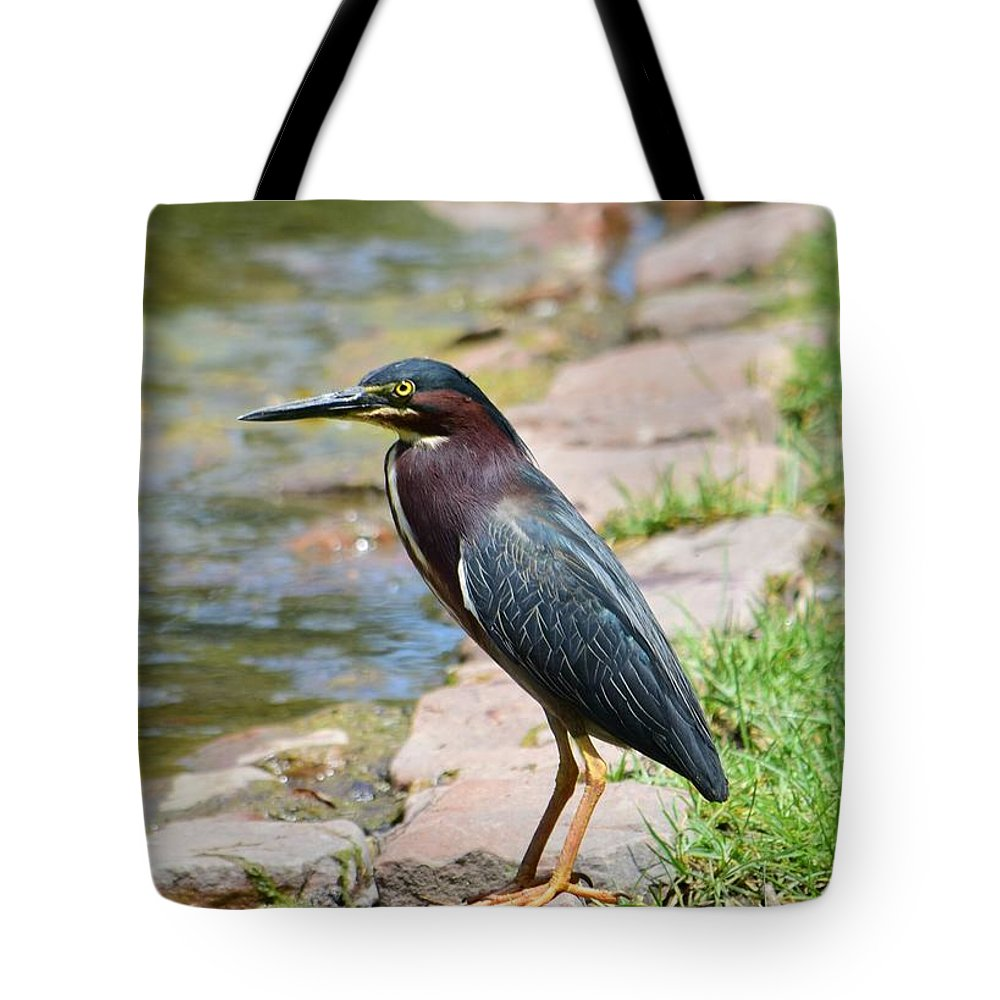 Bird Tote Bag featuring the photograph Green Heron-1 by Floyd Kauffman