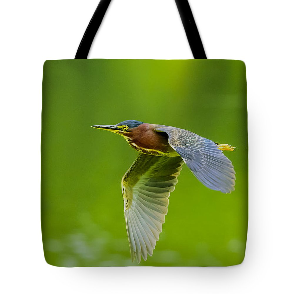 Ardeidae Tote Bag featuring the photograph Green Heron On The Downdraft by Steve Samples