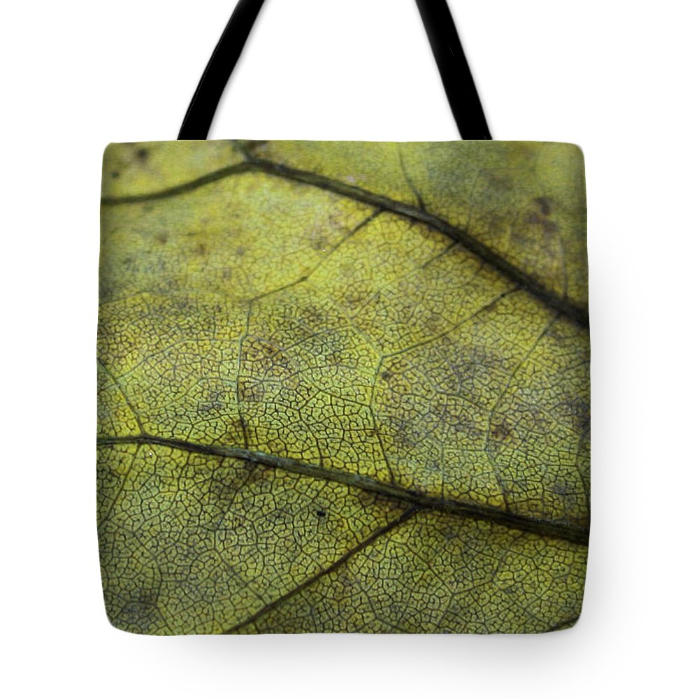 Nature Tote Bag featuring the photograph Green Leaf by Linda Sannuti