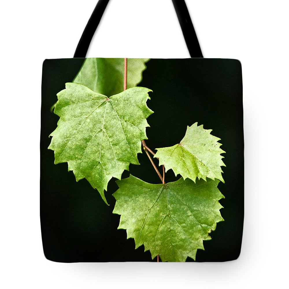 Flora Tote Bag featuring the photograph Green Leaves by Christopher Holmes