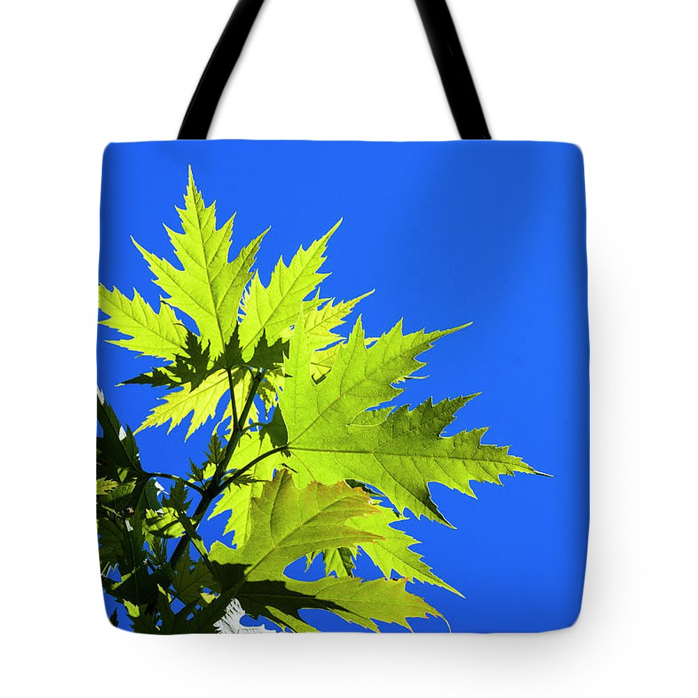 Astoria Tote Bag featuring the photograph Green Maple Leaves by Robert Potts