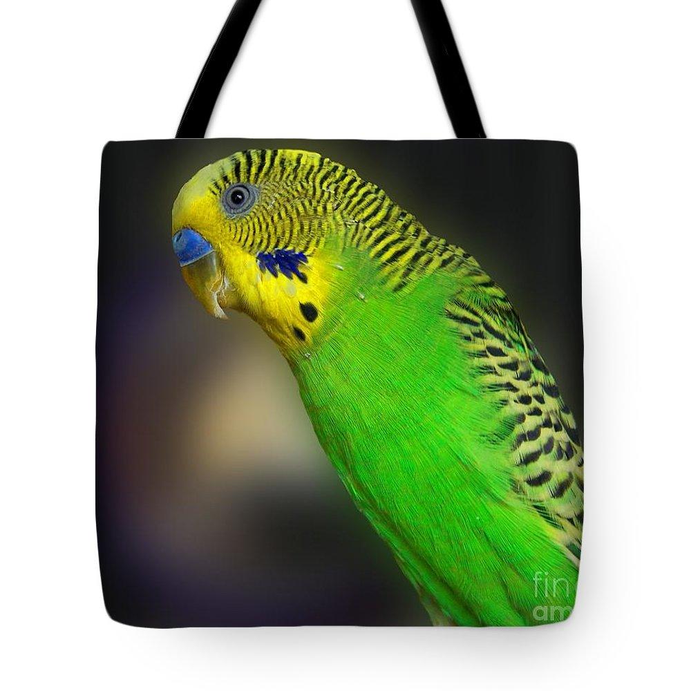 Bird Tote Bag featuring the photograph Green Parakeet Portrait by Jai Johnson