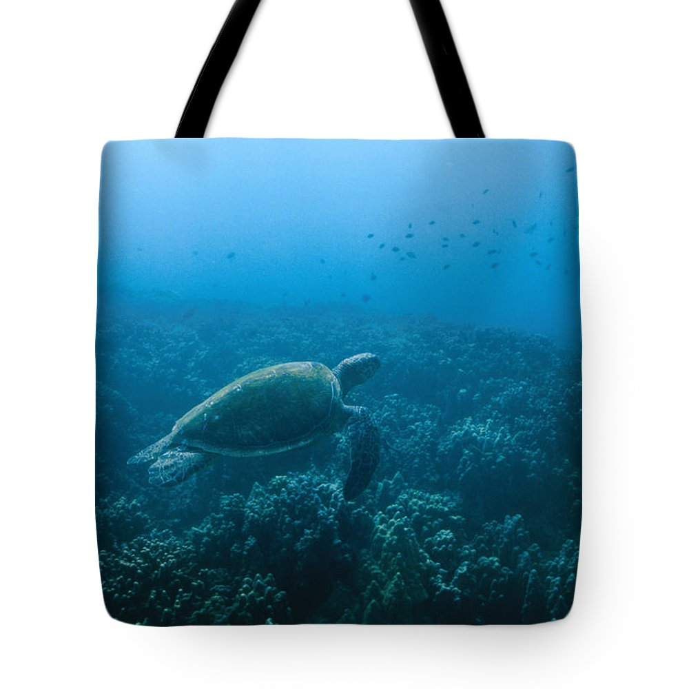 Mexico Tote Bag featuring the photograph Green Sea Turtle Swimming Over Coral by James Forte