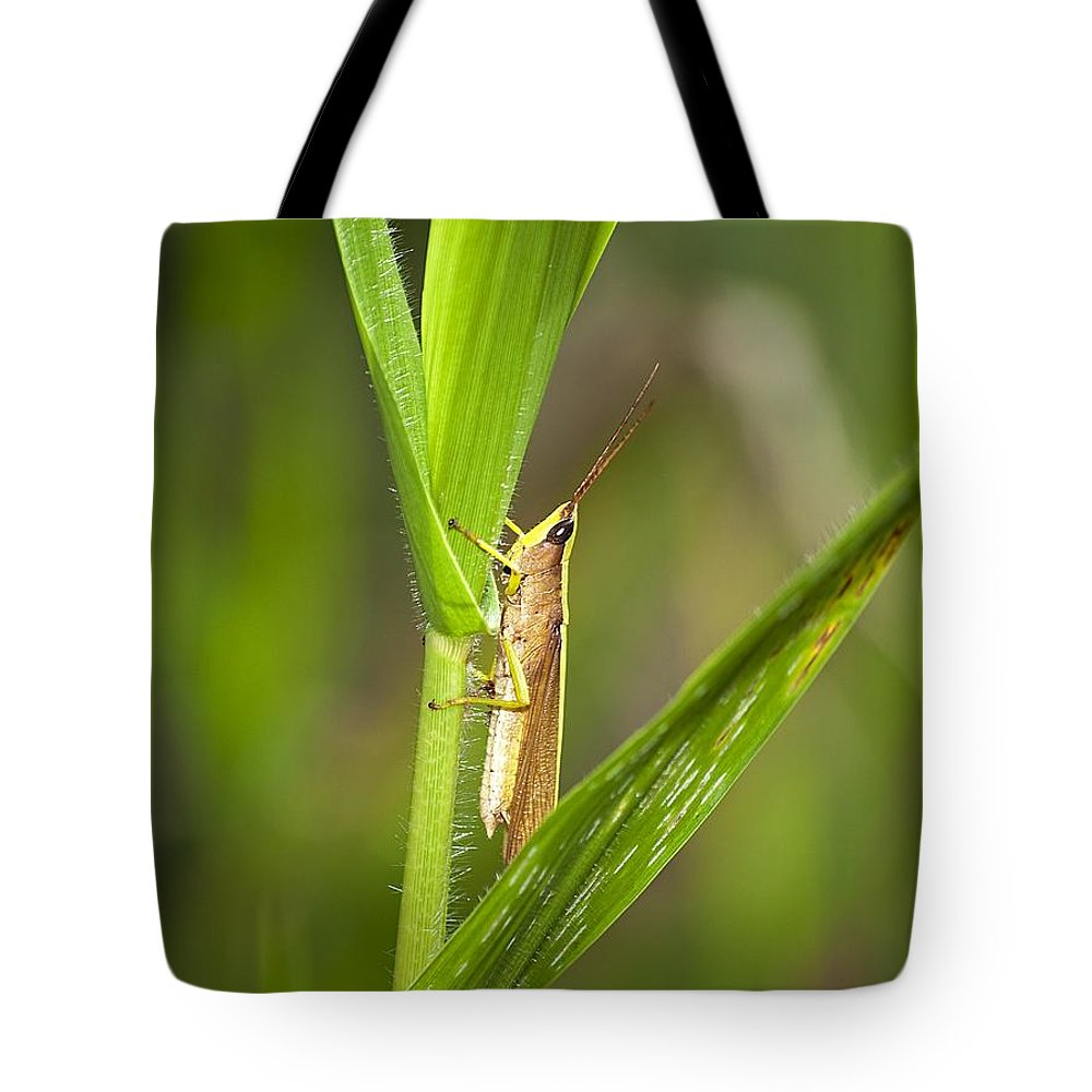 Grasshopper Tote Bag featuring the photograph Green Slantfaced Grasshopper by Kenneth Albin
