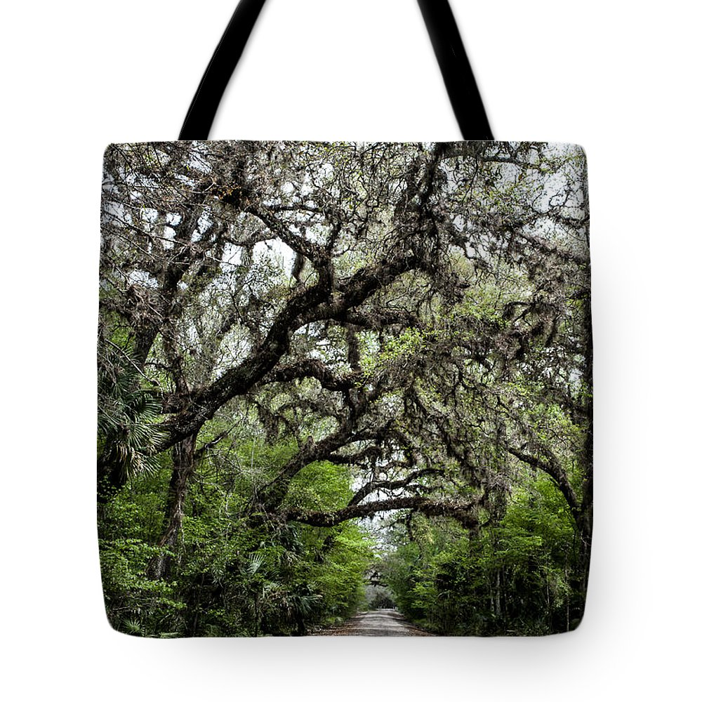 Landscape Tote Bag featuring the photograph Green Swamp Oak Bower by Norman Johnson