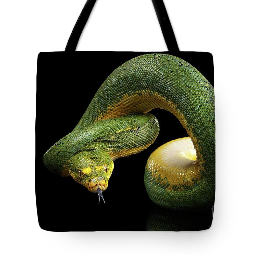 Snake Tote Bag featuring the photograph Green Tree Python. Morelia Viridis. Isolated Black Background by Sergey Taran
