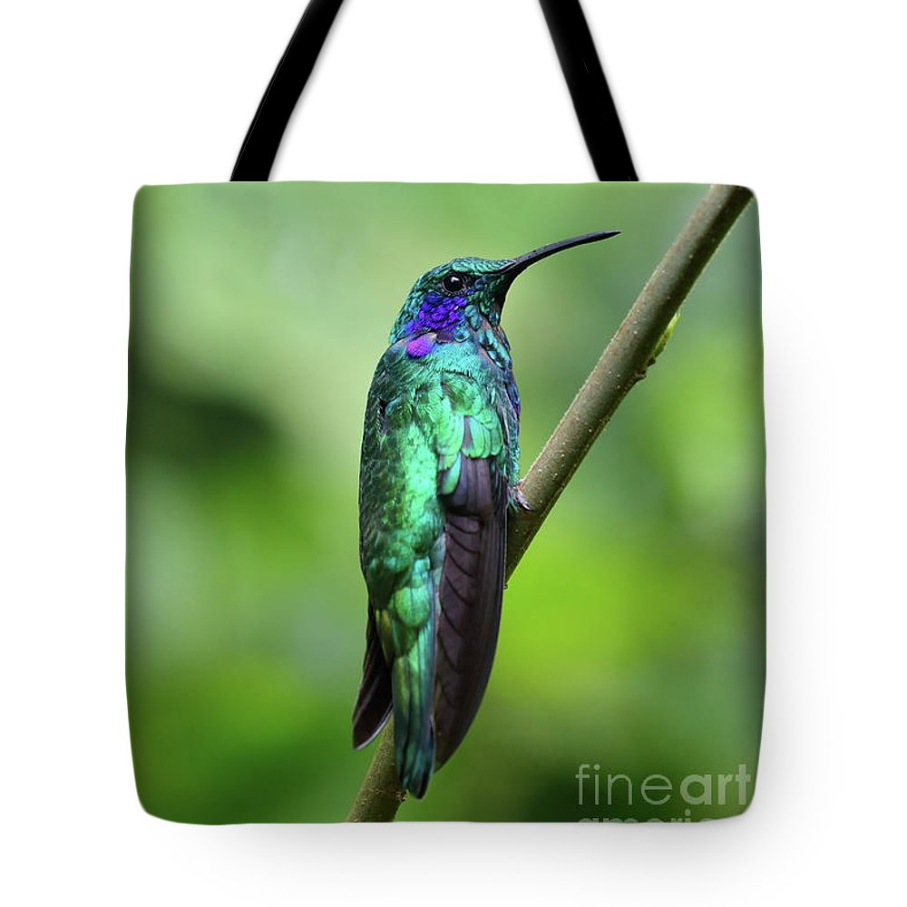 Hummingbird Tote Bag featuring the photograph Green Violet Ear Hummingbird by Leia Hewitt