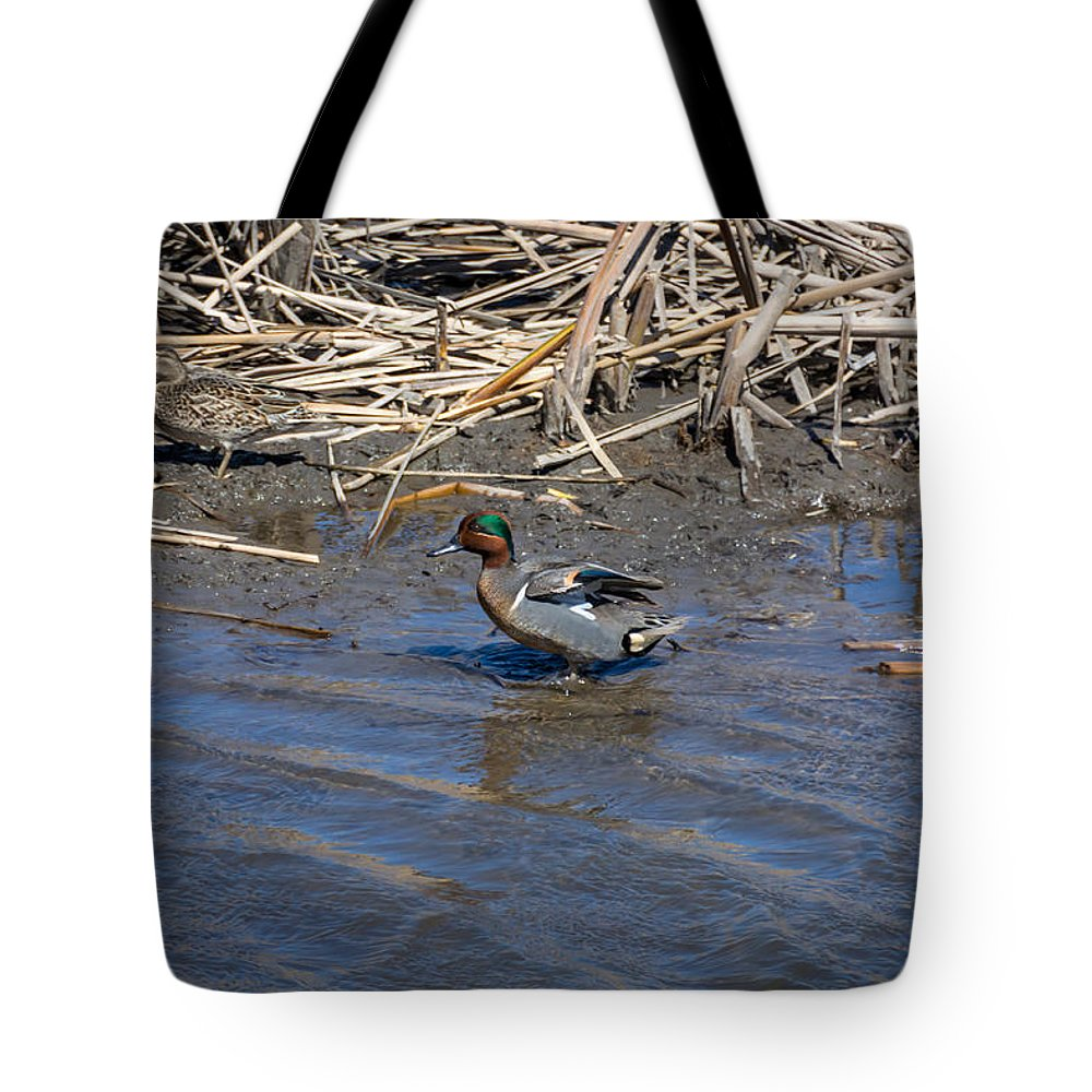 South Dakota Tote Bag featuring the photograph Green-winged Teal 7 by M Dale