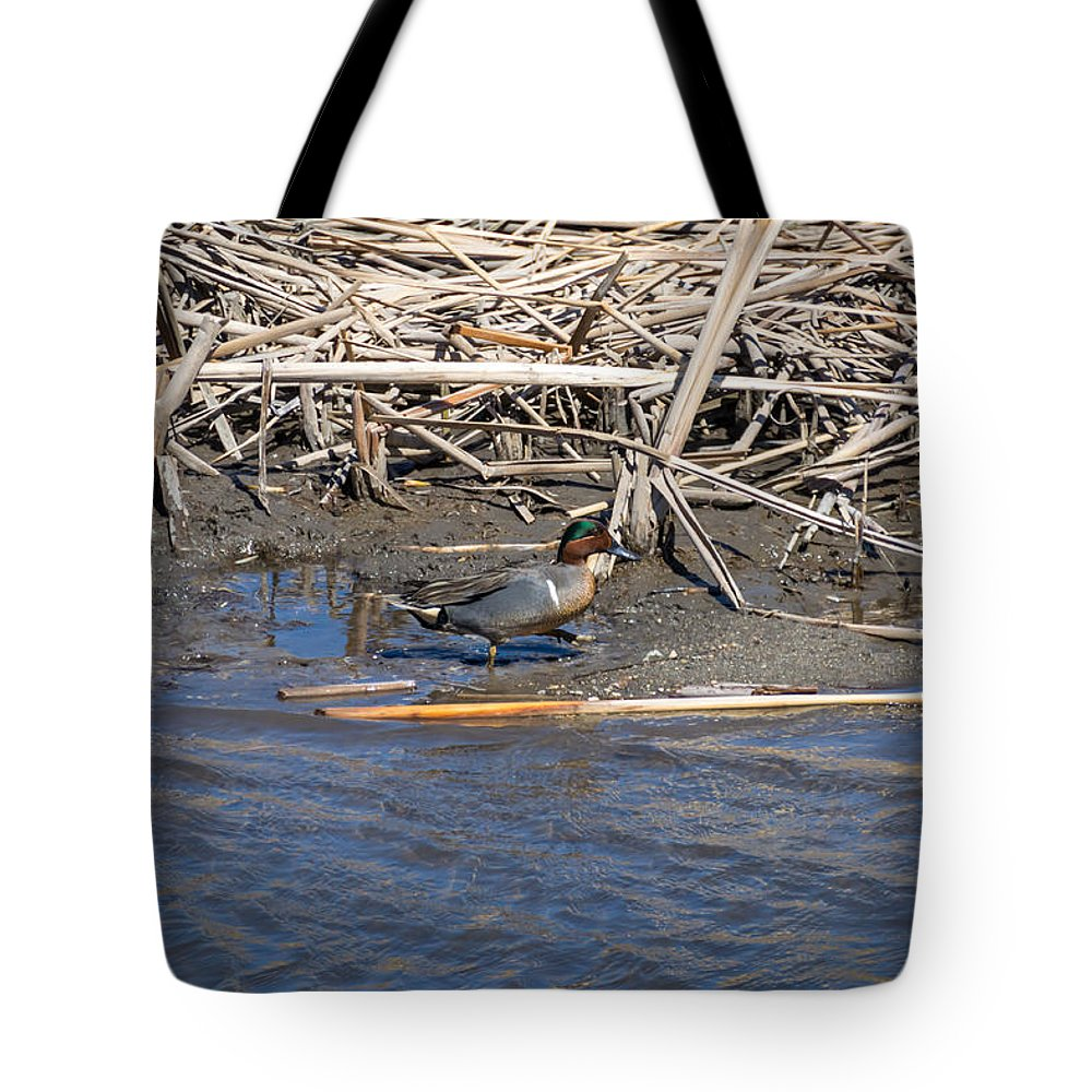 South Dakota Tote Bag featuring the photograph Green-winged Teal 8 by M Dale