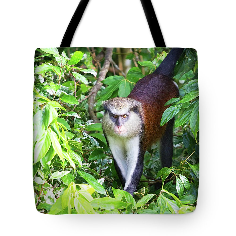 Wildlife Tote Bag featuring the photograph Grenada Monkey by Arthur Dodd