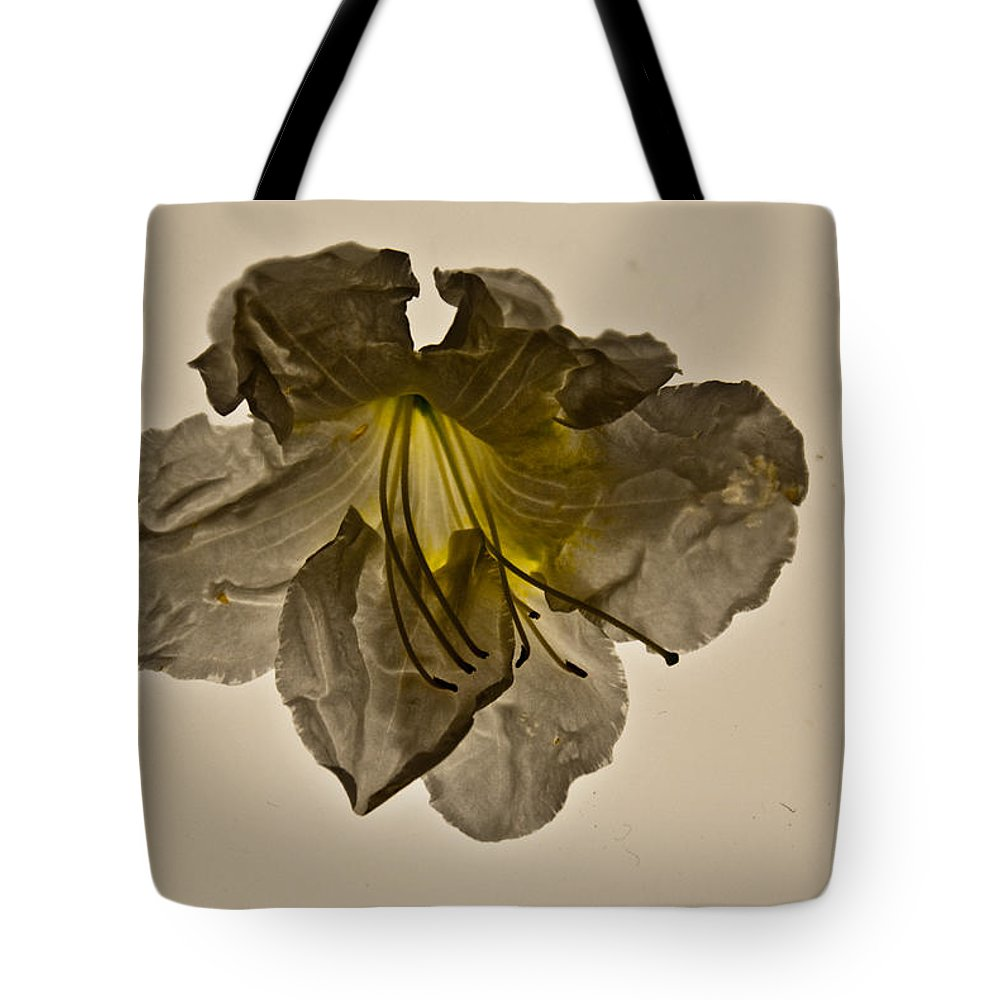 Ghost Tote Bag featuring the photograph Grey Ghost by Douglas Barnett