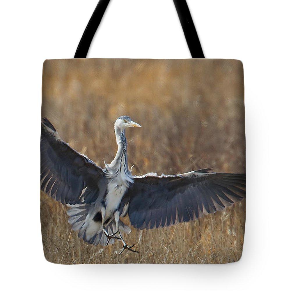 Heron Tote Bag featuring the photograph Grey Heron Landing by Bob Kemp