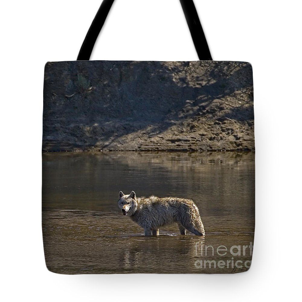Canis Lupis Tote Bag featuring the photograph Grey Wolf In The Yellowstone River-signed-#4363 by J L Woody Wooden